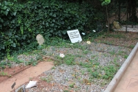 IMG_3534-cementerio-mascotas