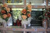 IMG_3633-cementerio-mascotas